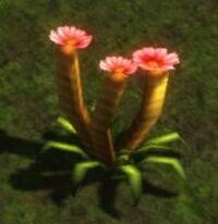 Tulip Plant.jpg