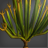 Cycas Icon.png