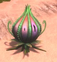 Dragon Pod Plant.png