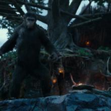Chimpanzee.png