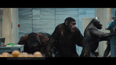 Rise of the Planet of the Apes19