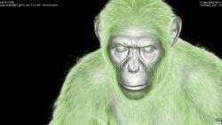 CG Chimp 3.jpg