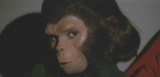 Breeding chimp