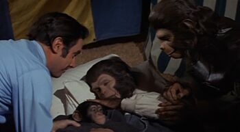Zira gives birth to Caesar