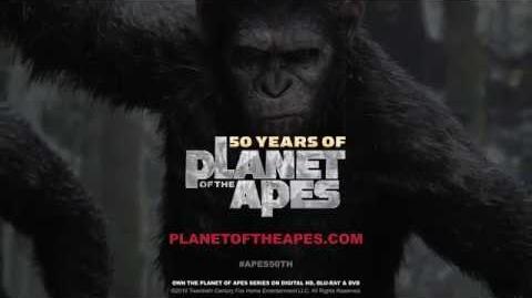 Ape_Biology_I_Orangutans