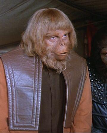 Orangutan council member.jpg