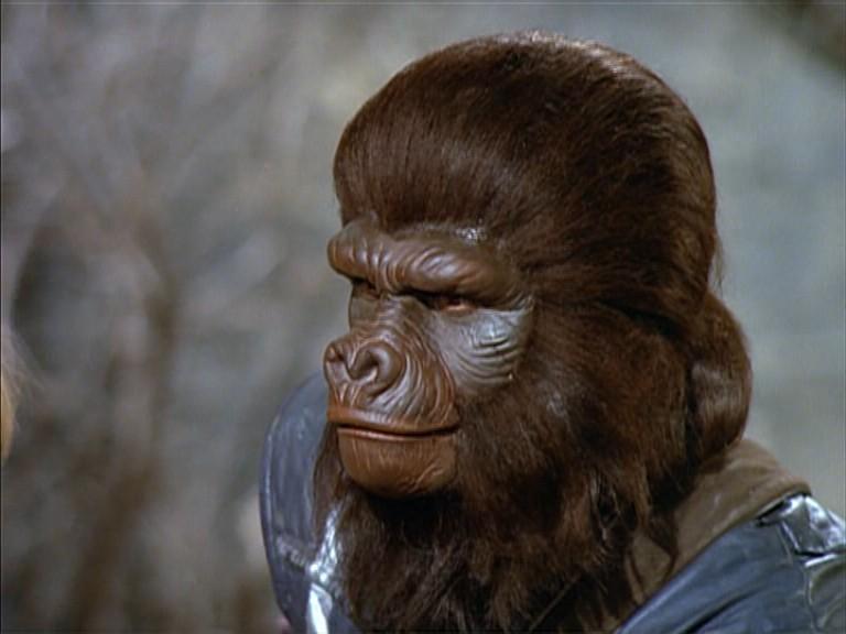 Gorilla sergeant
