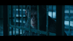 WPOTA Caesar in a cage.png