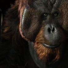 Rise Of The Planet Of The Apes Planet Of The Apes Wiki Fandom