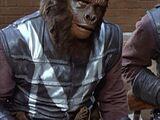 Gorilla captain