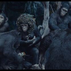 Royal Ape Family