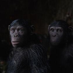 Caesar's Family (CE)