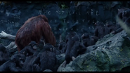 Ape not kill Ape