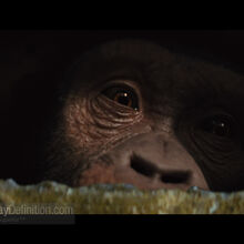 Rise of the Planet of the Apes02.jpg