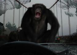 20SF256-Apes-on bridge v04-550x396.jpg