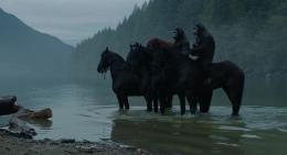 Horse (Animal)