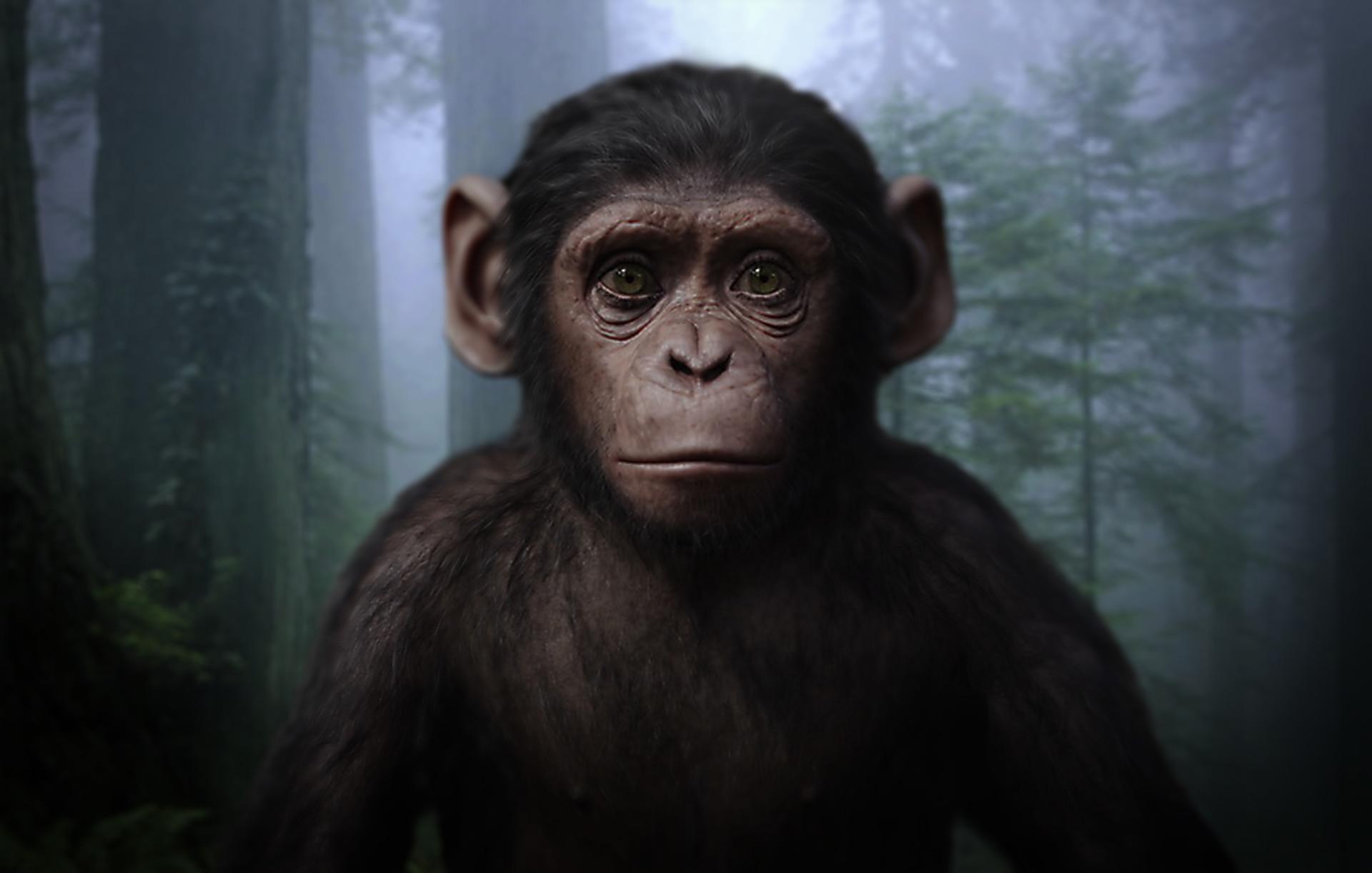 Ape Prince