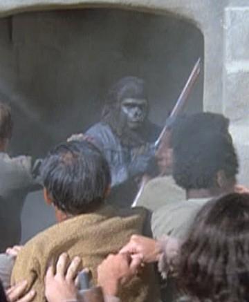 A gorilla guard