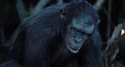 Koba in Ape Village.png