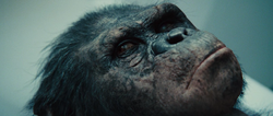 Rise Of The Planet Of The Apes 2011 720p BRRip XviD AC3-ViSiON-www intercambiosvirtuales org-2-153851.png