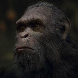 Khan's Ape Colony