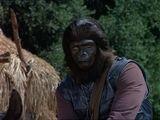 Patrol gorilla