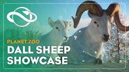 Planet Zoo Dall Sheep Showcase