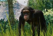 Chimpanzé verus