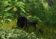 Gorille des plaies de l'ouest
