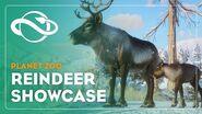 Planet Zoo Reindeer Showcase