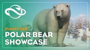 Planet Zoo Polar Bear Showcase