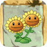 Twin Sunflower2.png.png