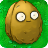 1Giant Wall-nut1.png