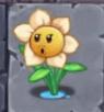 Narcissus Backwards