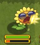 Attackingsun Sunflower