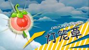 Groundcherry in Trailer