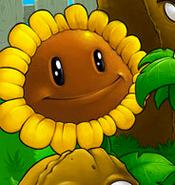 SunflowerLoadingScreen