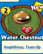 Receiving Water Chestnut
