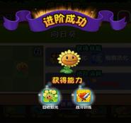 Upgrade for 2 level Sunflower
