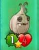Garlic23