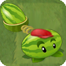 Melon-pult Chinese Costume