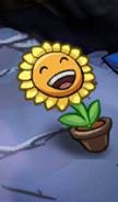 SunflowerPvZH
