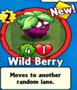 Receiving Wild Berry
