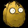 Wall-nut 1st Degrade