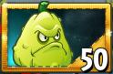 Squash New Seed Packet Prem