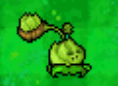 DS Cabbage
