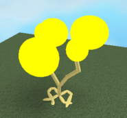 Image161 - Soloak Tree