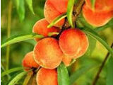 Heavenly Peach