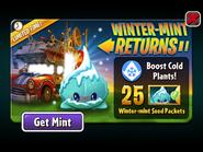Winter-mint Returns