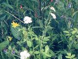 Terracotta Wildflower